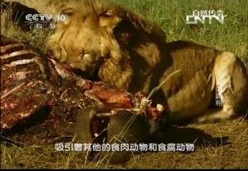 《自然传奇》 20130903 鬣狗的真相