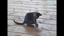 Des petits chats trop mignons - Compilation d'animaux adorables.