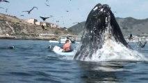 Baleine géante VS filles en kayak... La folie!