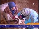 La naissance du veau à deux têtes au Maroc