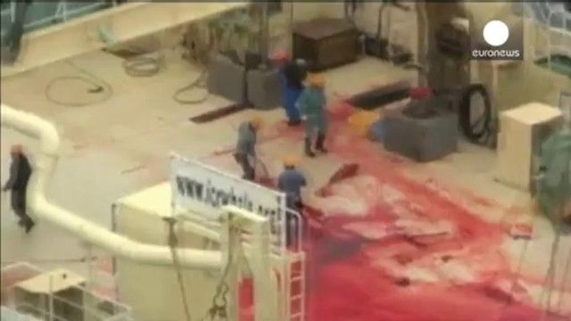 Conservation group slam Australian government over alleged Japanese whale slaughter