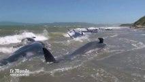 Une quarantaine de baleines s'échouent sur une plage de Nouvelle-Zélande