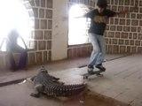 Sauter en skateboard au-dessus d'un crocodile