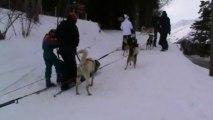chiens de traîneau 2