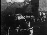 Bellezze d'Italia. Il colle del Gran San Bernardo (2472 metri di altezza) nel cuore delle Alpi Pennine è noto soprattutto per l'ospizio fondatovi nel 982 da San Bernardo. Da questo colle scese in Italia Napoleone nel 1800. I frati agostiniani vi alle..