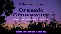 FNW - Iplanted Apollos Watered Godgave Thegrowth (PCu #Chillout #Ambient Mix)