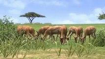 Afrika - Trailer TGS 2007