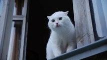 Katze hasst es belästigt zu werden