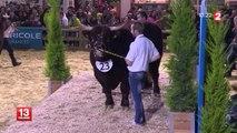 Pourquoi présente-t-on ses vaches au Salon de l'agriculture ?