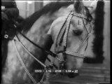 Von Brauchitsch  a nome dell'esercito tedesco  offre in dono un cavallo pregiato al generale von Mackensen  padre dell'ambasciatore tedesco a Roma presso il Quirinale  in occasione del suo novantesimo compleanno. Hitler raggiunge l'anziano generale p..