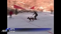 Tortoise beats rabbit and other animals in Chinese pet ski-off