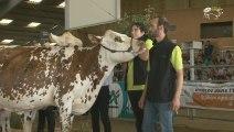 Normande & Montbeliarde : 2013 Festival de l'élevage et de la gastronomie à Parthenay