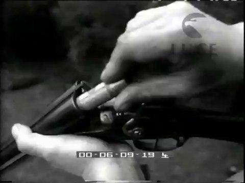 Battuta di caccia al cinghiale nella riserva di Castelfusano.