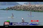 Perros surfistas entrenan en Brasil para competencia de mascotas