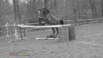 gym obstacle oxer
