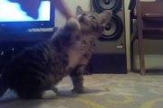 So cute 8 Week Old Baby cat.. Adorable Kitten!