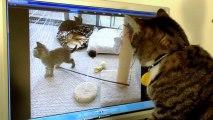 Chat recherche des chatons derrière l'écran d'ordinateur qui s'est éteind