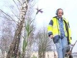 La mairie de Versailles n'utilise plus de pesticides pour l'entretien de ses espaces verts - 23/01