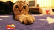 Bétisier d'un show tv Australien - Fou-rire incontrolable à cause de chats!