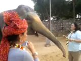 Feeding fun with Elephants. How to feed Elephants