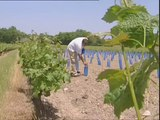 Métiers de l'enseignement agricole : je suis ouvrier viticole