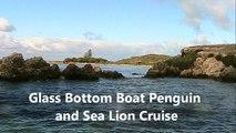 Tourist Delight, Penguin and Sea Lion Cruise, Glass Bottom Boat - Western Australia Holidays