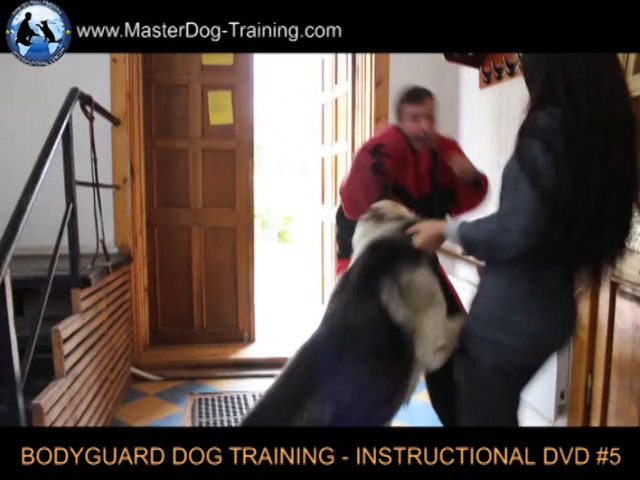 Bodyguard dog Level Two – How to Train a Dog – Instructional Video