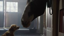 "[Super Bowl 2014] Budweiser Super Bowl XLVIII Commercial - ""Puppy Love"""