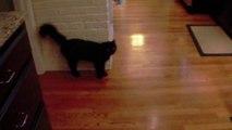 Des chats pas très sympas - Compilation d'attaques de matous!