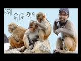orissa cricket ranji cricketer natraj behera orissa sports (5)