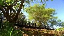 وثائقي BBC | سلسلة حديقة ما قبل التاريخ -4- انقاذ السنوريات