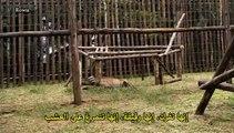 وثائقي BBC | سلسلة حديقة ما قبل التاريخ -5- بيت الحشرات