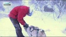 Découverte du ski nordique et de la cani-raquette au Lac Blanc
