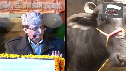 UP Minister's Buffaloes more famous than Queen Victoria: