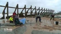 Des traces de pas vieilles de 800 000 ans découvertes en Angleterre