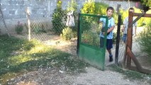 Batica's Turkeys in the village of Zap. Toponica 20120812
