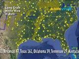 White Rice, US White Rice, US White Rice, White Rice Crop Information, White Rice Crop, White