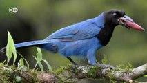 Biodiversity in the Mata Atlântica - Araucaria forests under pressure   Global 3000
