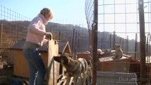 Shelters built for stray dogs in Sochi