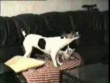 vanille le jack contre moustic le chat