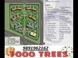 9891962162- great value 1000 trees sohna gurgaon road sector-6