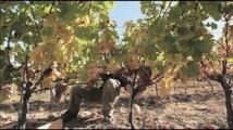 Extrait de Douces Frances Rhone Alpes HD