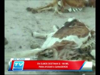Chiclayo: En Olmos destinan 100 mil soles para ayudar a ganaderos  13 02 14