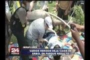 Miraflores: caída de antiguo árbol dejó heridos en Parque Reducto
