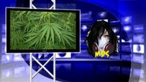 Weed Buying App, How to buy weed on andriod or Smart phone