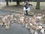L'île des Lapins au Japon : Ōkunoshima