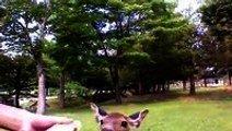 A deer wanted a bottle of water in Nara, Japan.