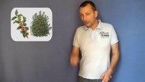 Chanson d'amour pour un arrosoir en aluminium - Raphaël Zacharie de IZARRA L'astre radin  réplique avec des radis