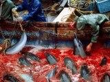 Freedom for dolphins - La liberté pour les dauphins #tweet4taiji