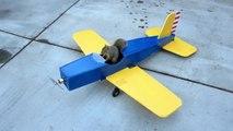 Un écureuil vole un avion RC
